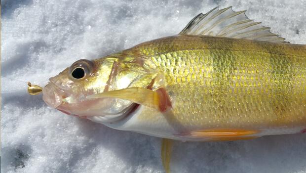 Best ice fishing jigs