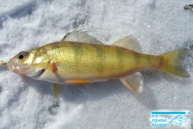 The best ice fishing jigs ice fishing reviews for Best ice fishing jigs