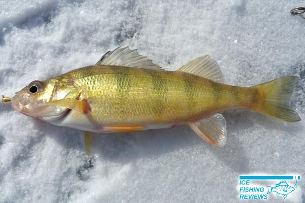 Clam Drop ice fishing jig